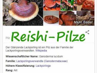 Heilpilze-Reishi Pilz ein Superfood? ©googlesuche