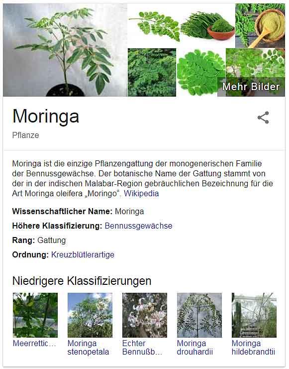 Moringa-Googlesuche Bilder superfood oder nicht?