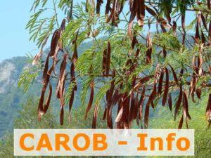 Carob Carobpulver vom Baum aus Carobfrüchten Info