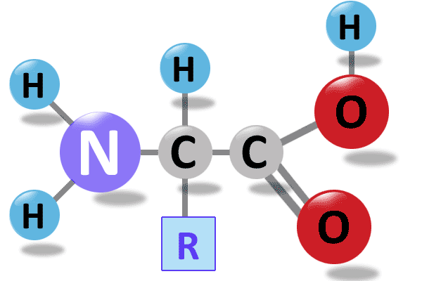 Aminosäuren Aufbau Bild Grundstrukturaufbau Amino Säure